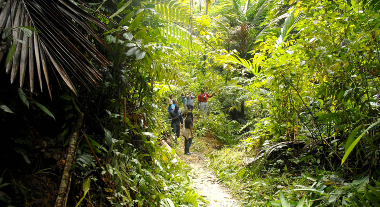Tobago Main Ridge Forest Reserve